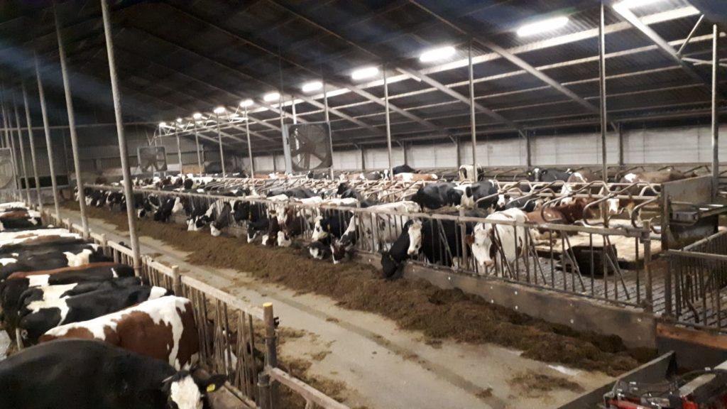 Koeienstal verlichting met Smart [3]